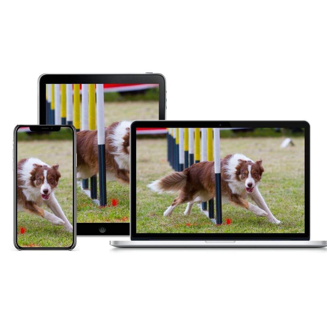 Intro to Dog Sports Course product image | Pupford