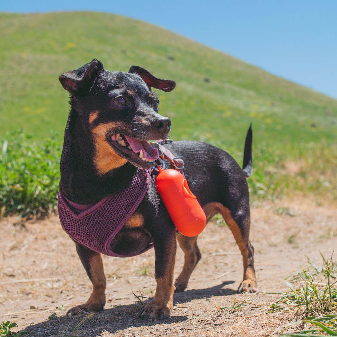 poop bag holder clipped to dog's harness | Pupford