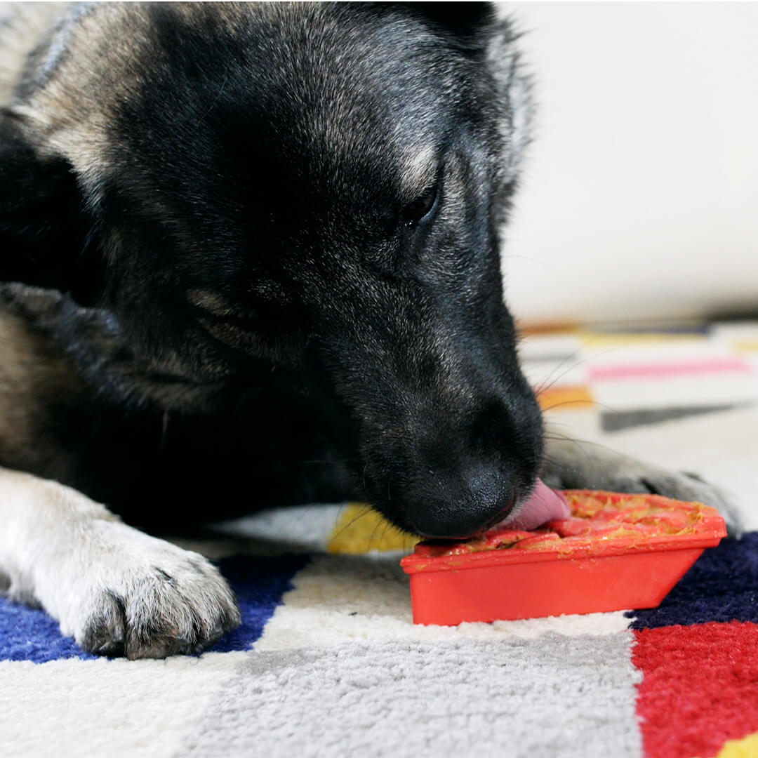 dog using cherry pie enrichment toy | Pupford