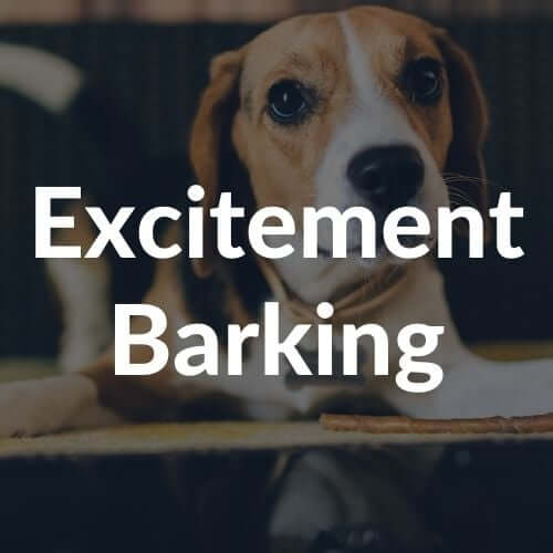 excitement-barking-thumbnail | Pupford