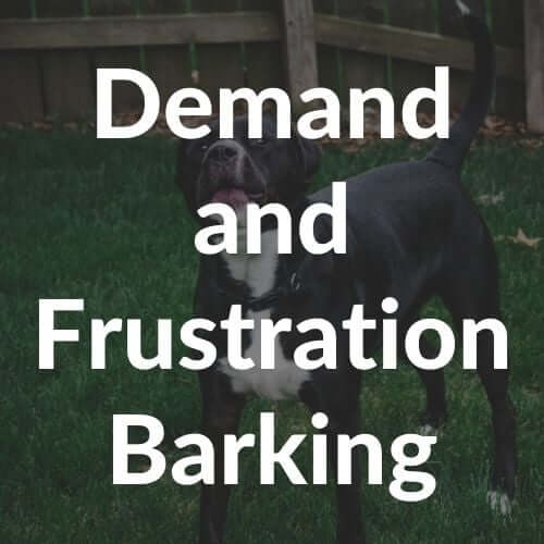 frustration-and-demand-barking-thumbnail | Pupford