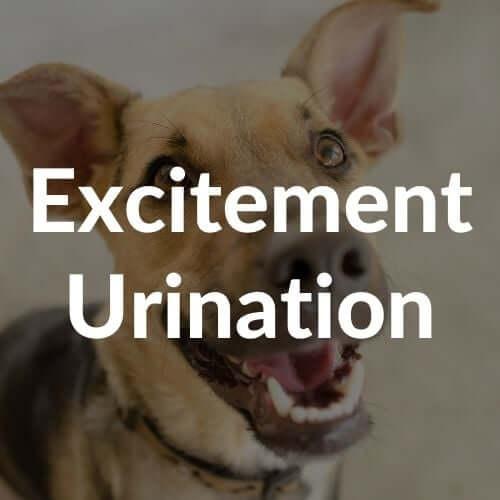 excitement-urination-thumbnail | Pupford