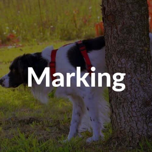 marking-thumbnail | Pupford
