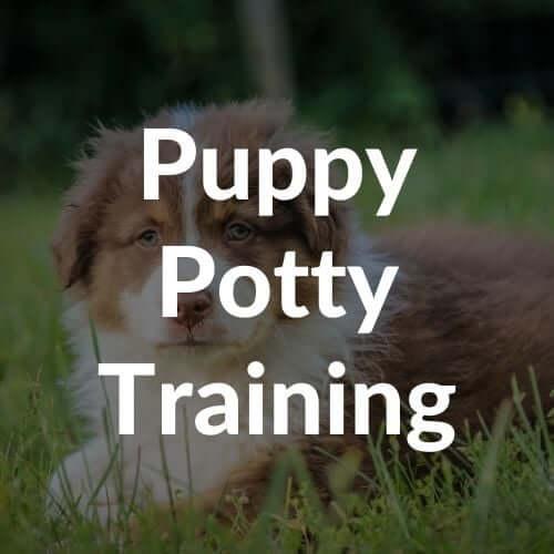 puppy-potty-training-thumbnail | Pupford