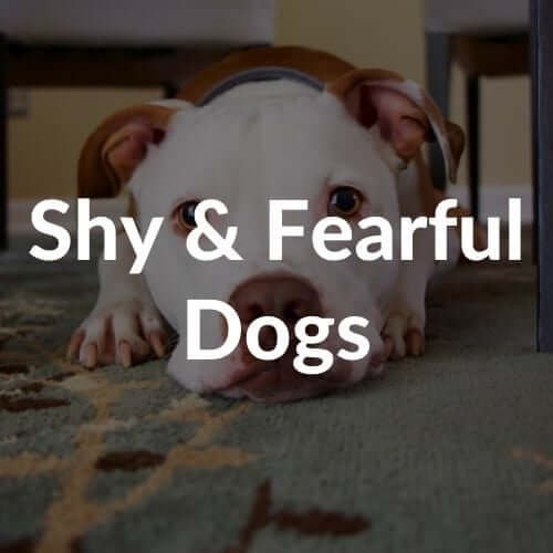 shy-and-fearful-dogs-thumbnail | Pupford