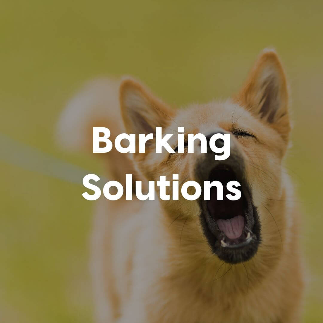 Barking-Solutions-Gallery-Image | Pupford