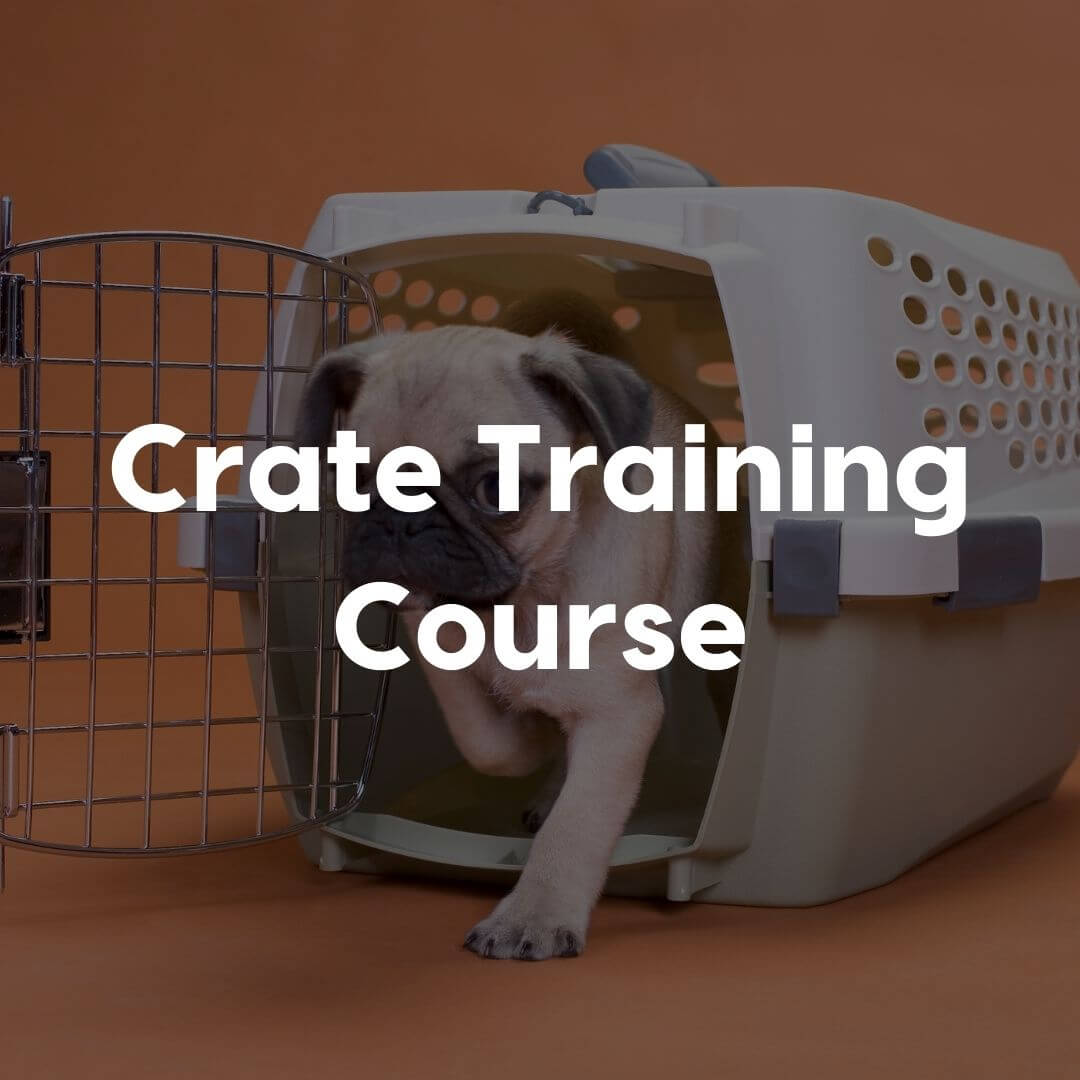 Crate training course gallery image | Pupford