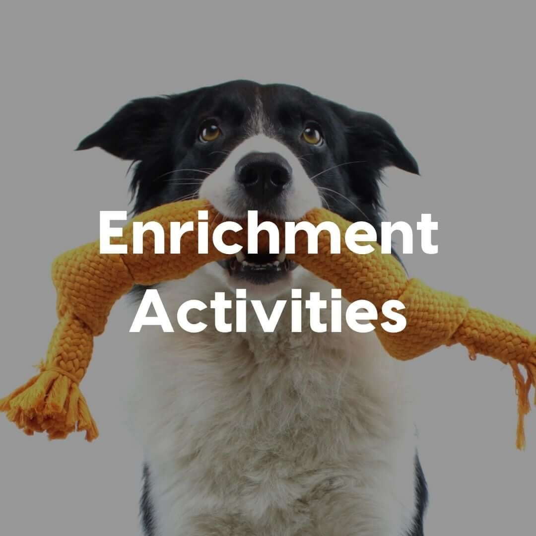 Enrichment-Activites-Gallery-Image | Pupford