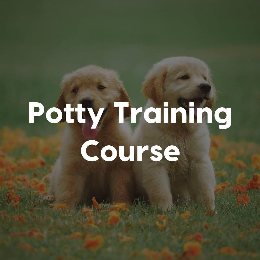Potty-Training-Gallery-Image | Pupford