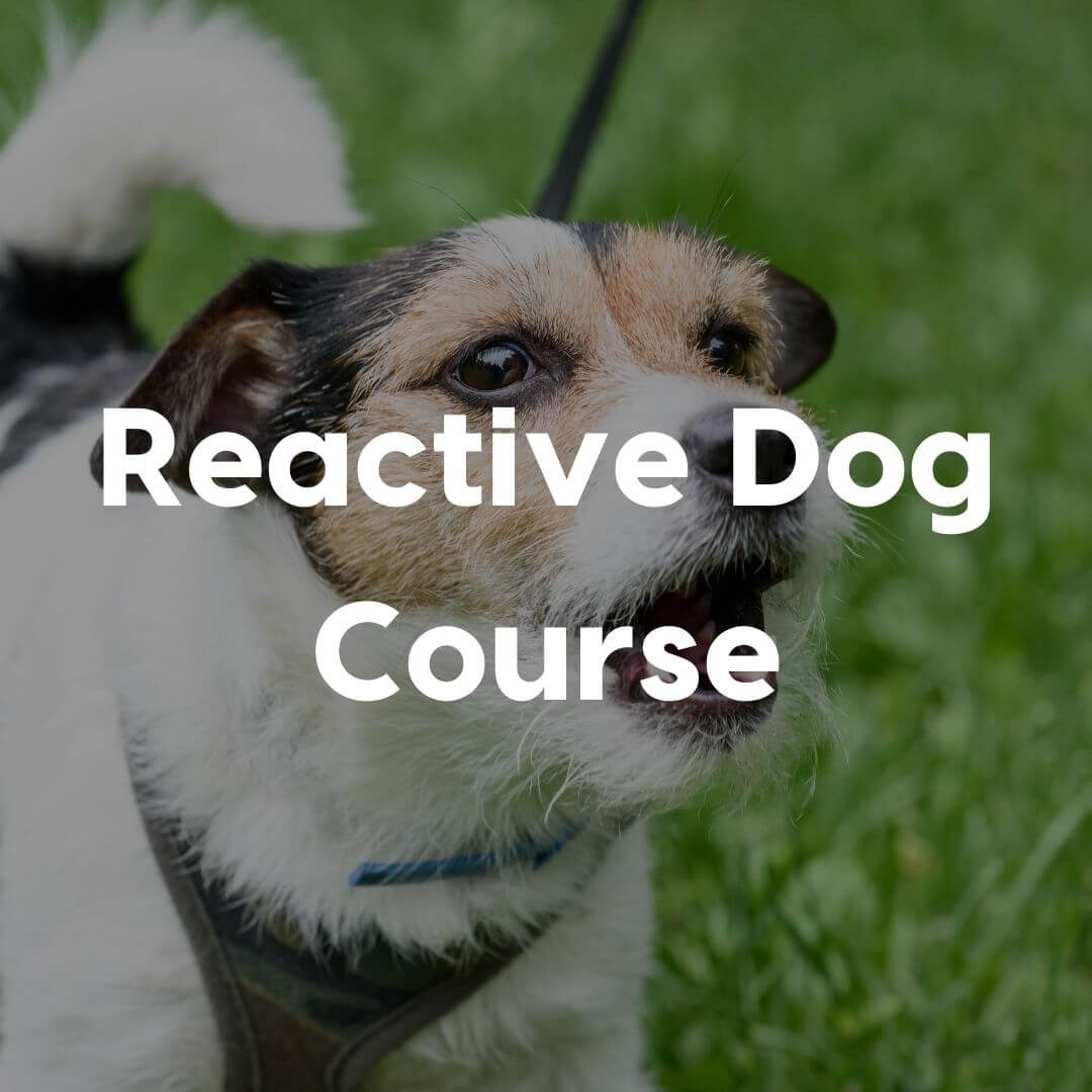 reactive dog course gallery image | Pupford