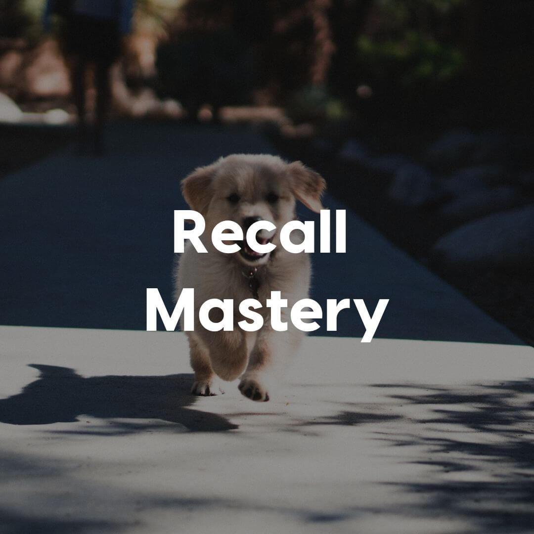Recall-Mastery-Gallery-Image | Pupford