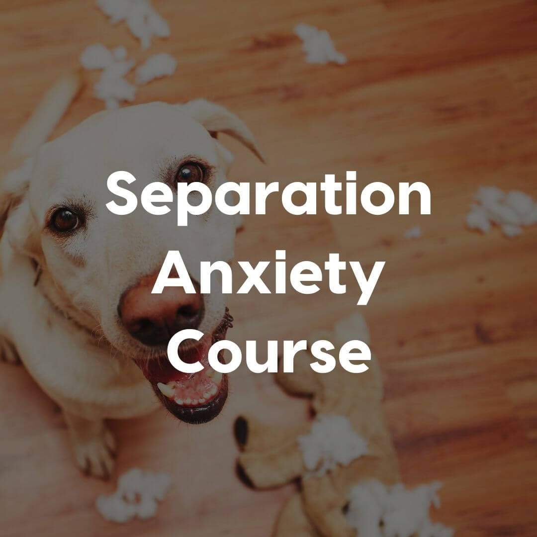 separation anxiety course gallery image | Pupford