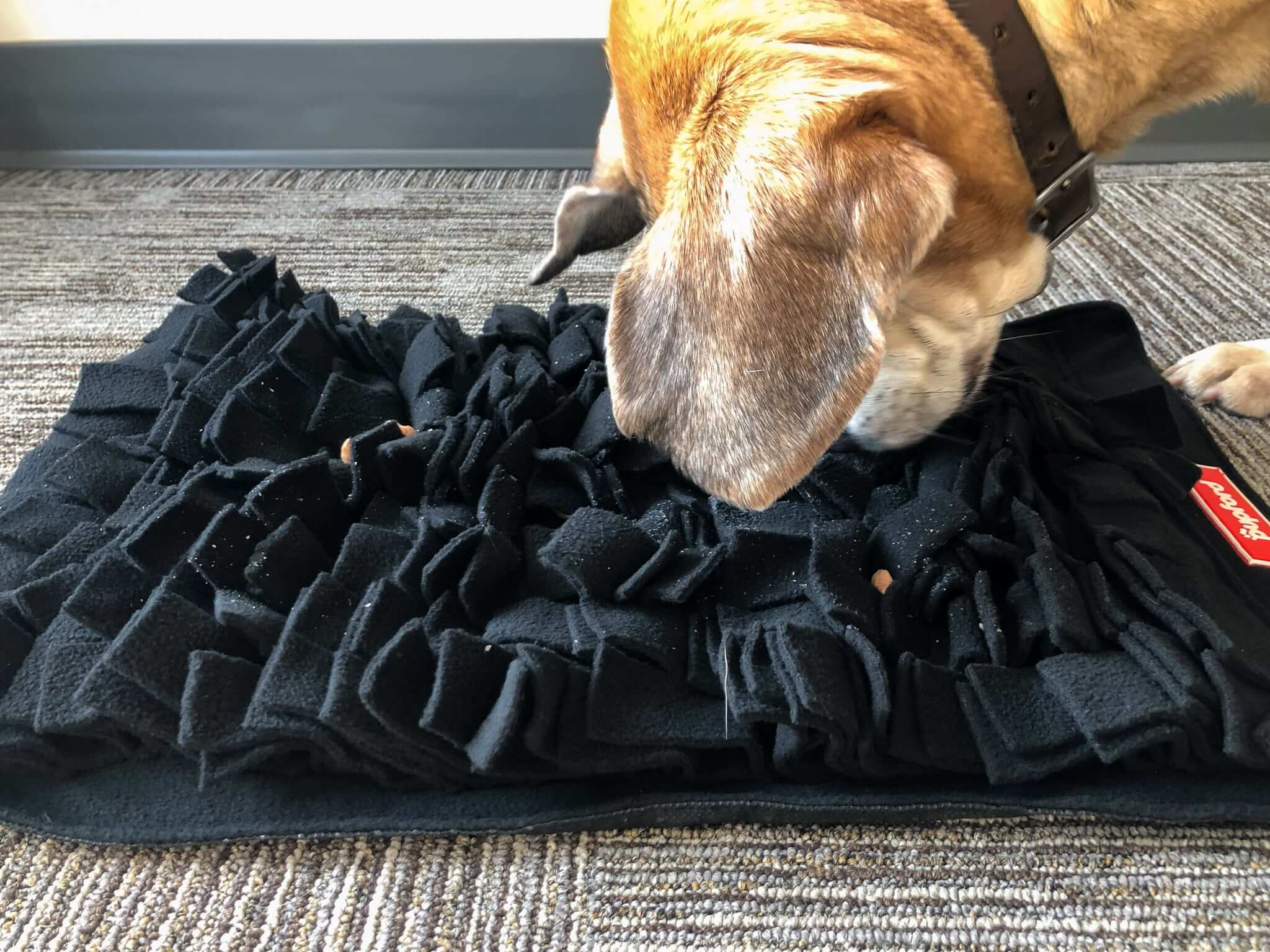 dog using a snuffle mat | Pupford