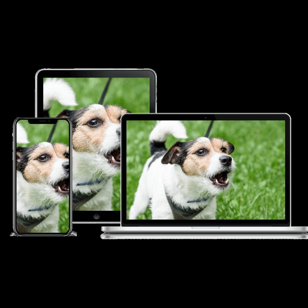reactive dog course | Pupford