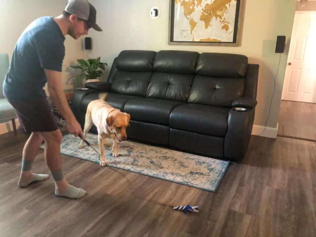 dog-chasing-after-flirt-pole-toy | Pupford