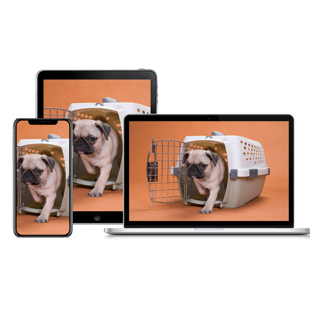 Crate Training Course product image   Pupford