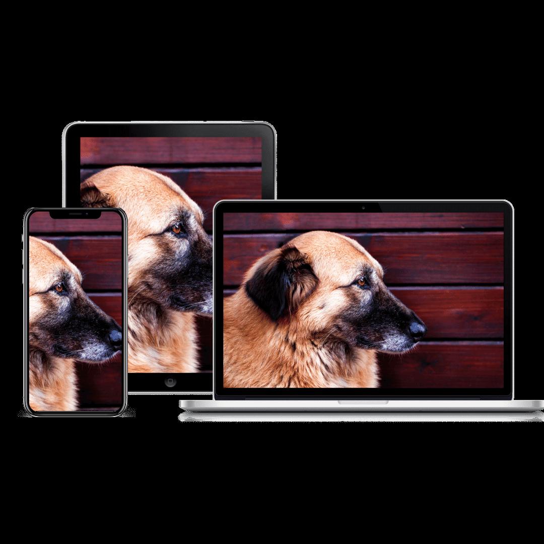 dog body language product image | Pupford