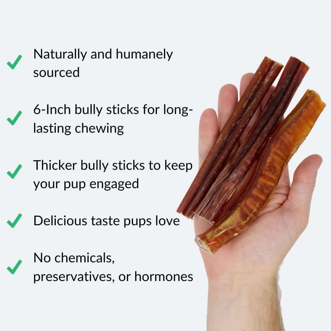 bully-sticks-in-hand-with-benefits-gray-background | Pupford