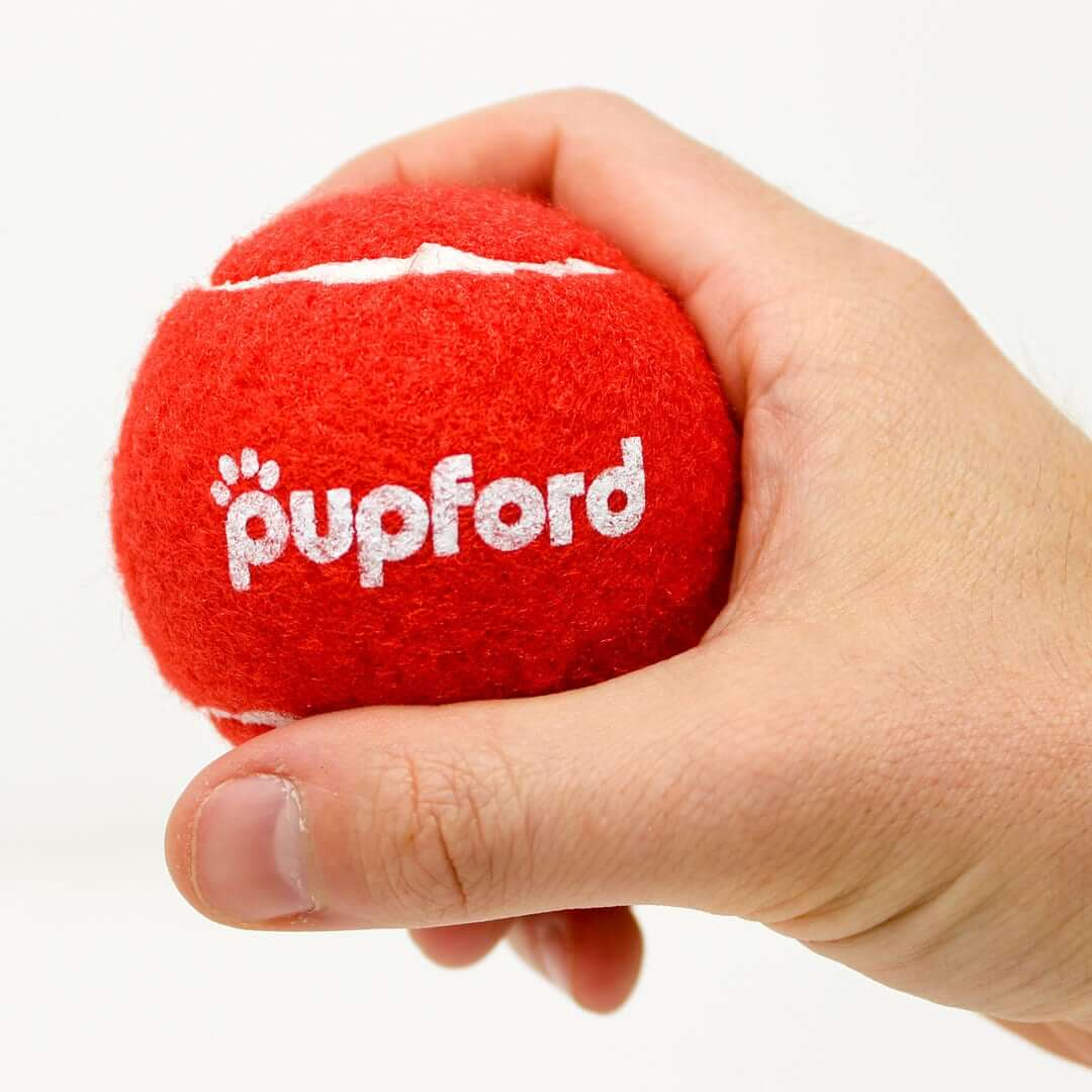 Pupford-Tennis-Ball-in-Hand | Pupford