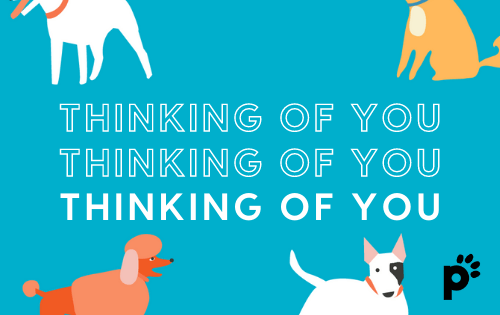 thinking of you gift card | Pupford