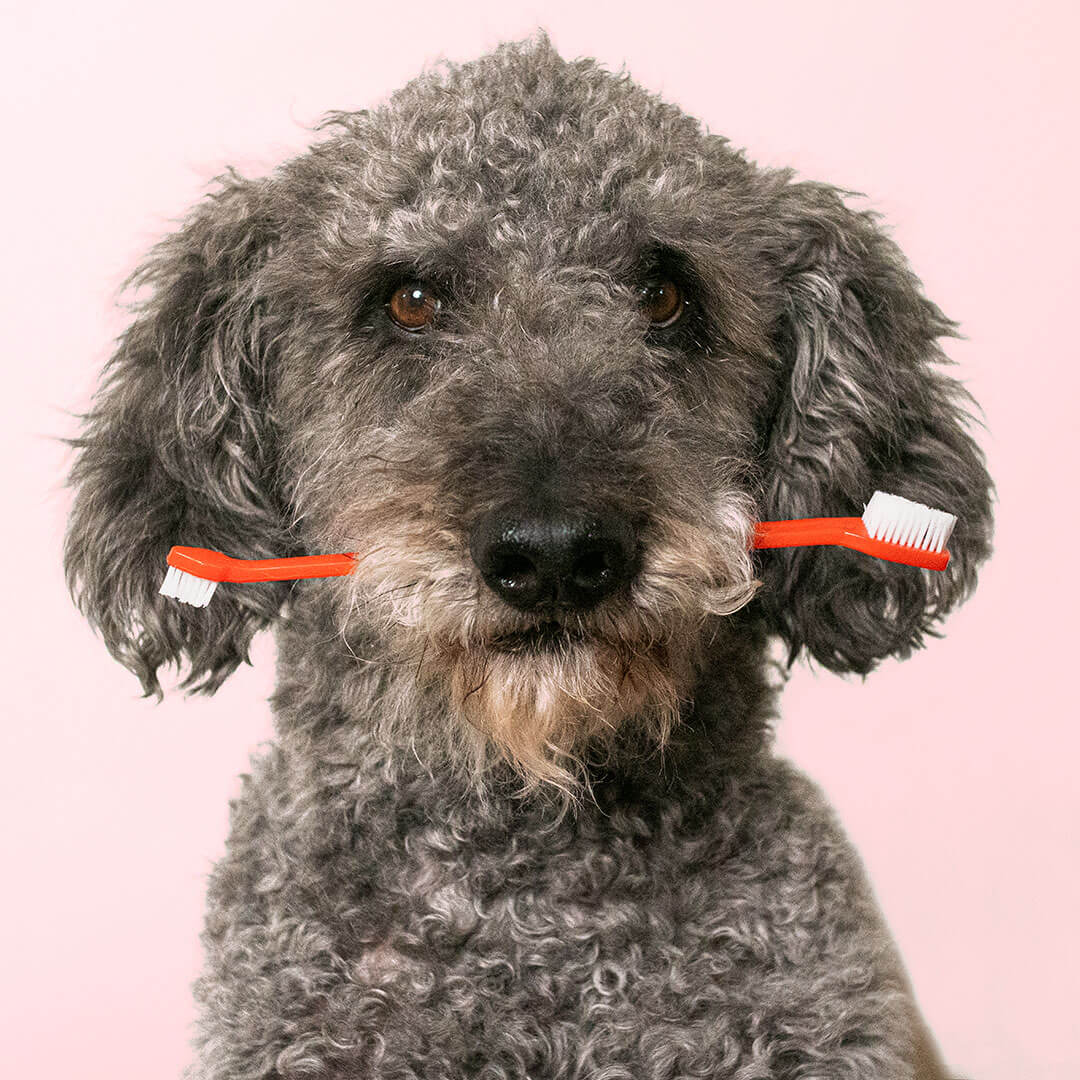 dog with toothbrush in mouth | Pupford