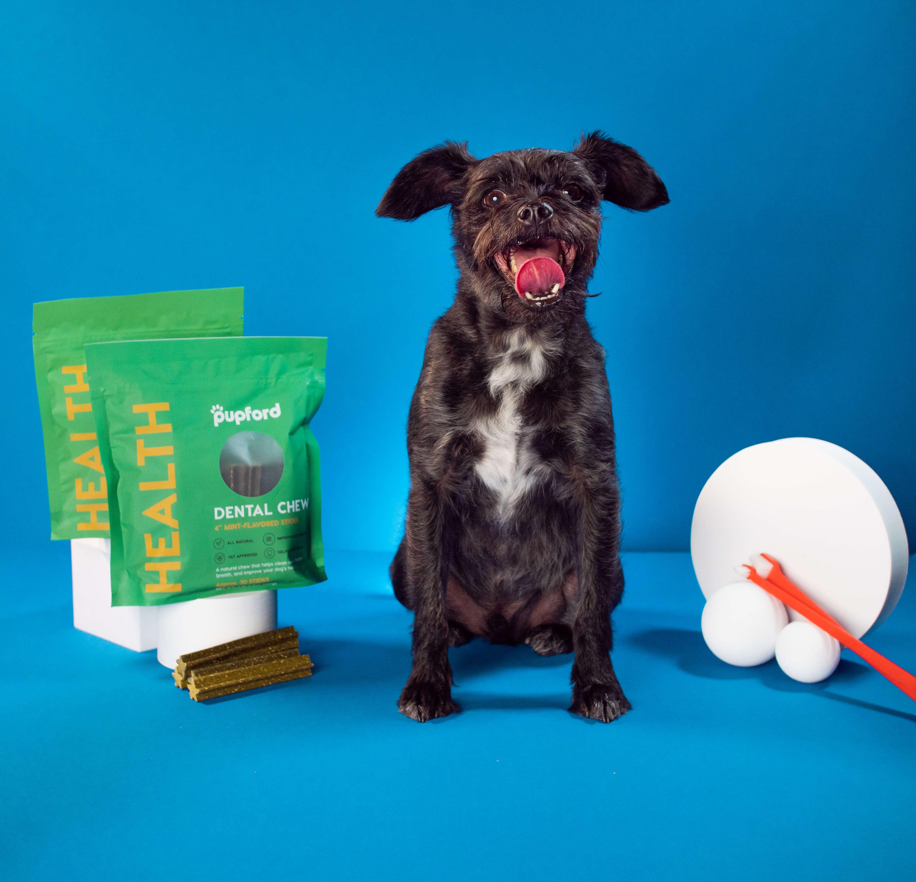 dog posing next to dental chews | Pupford
