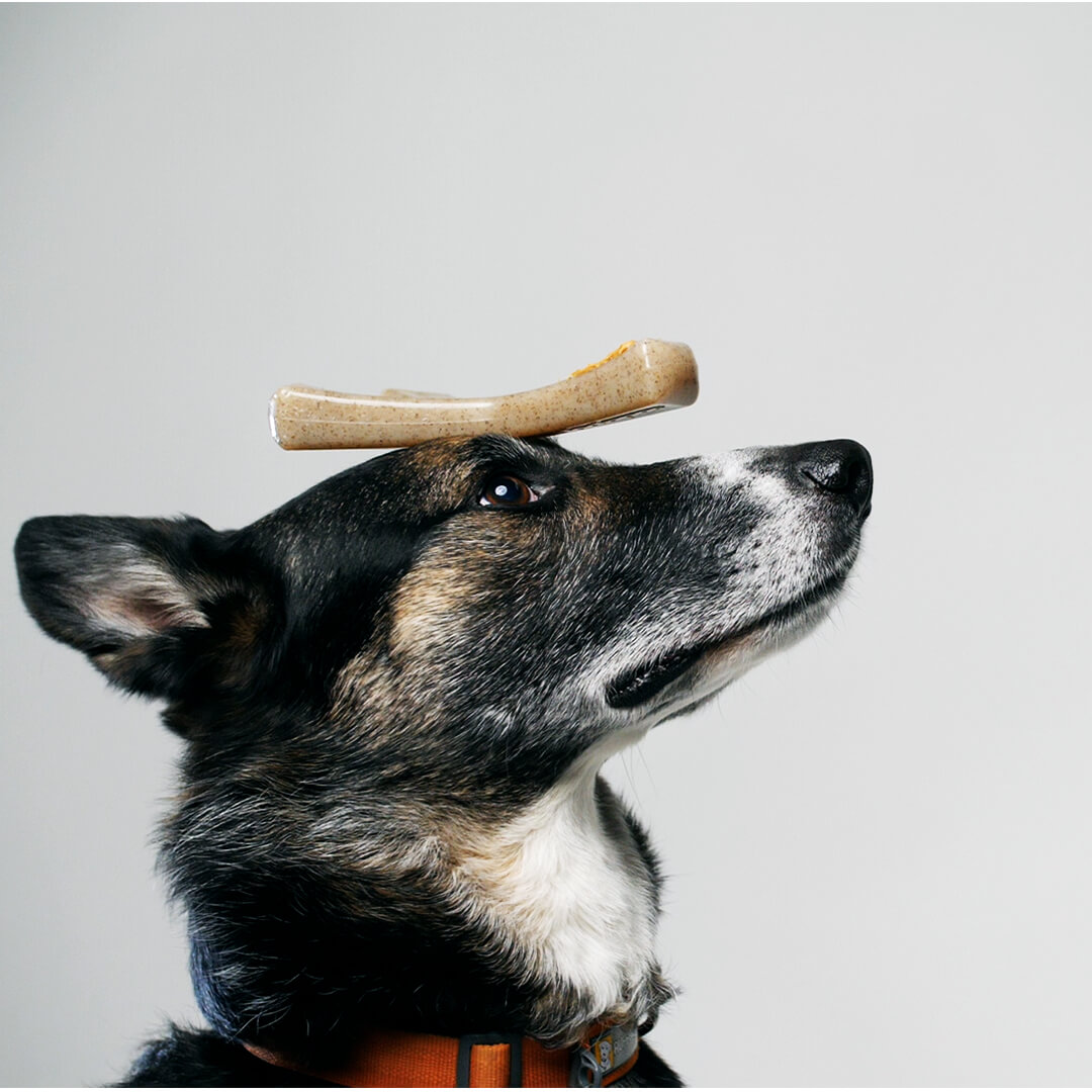dog with wisbhone toy on head | Pupford