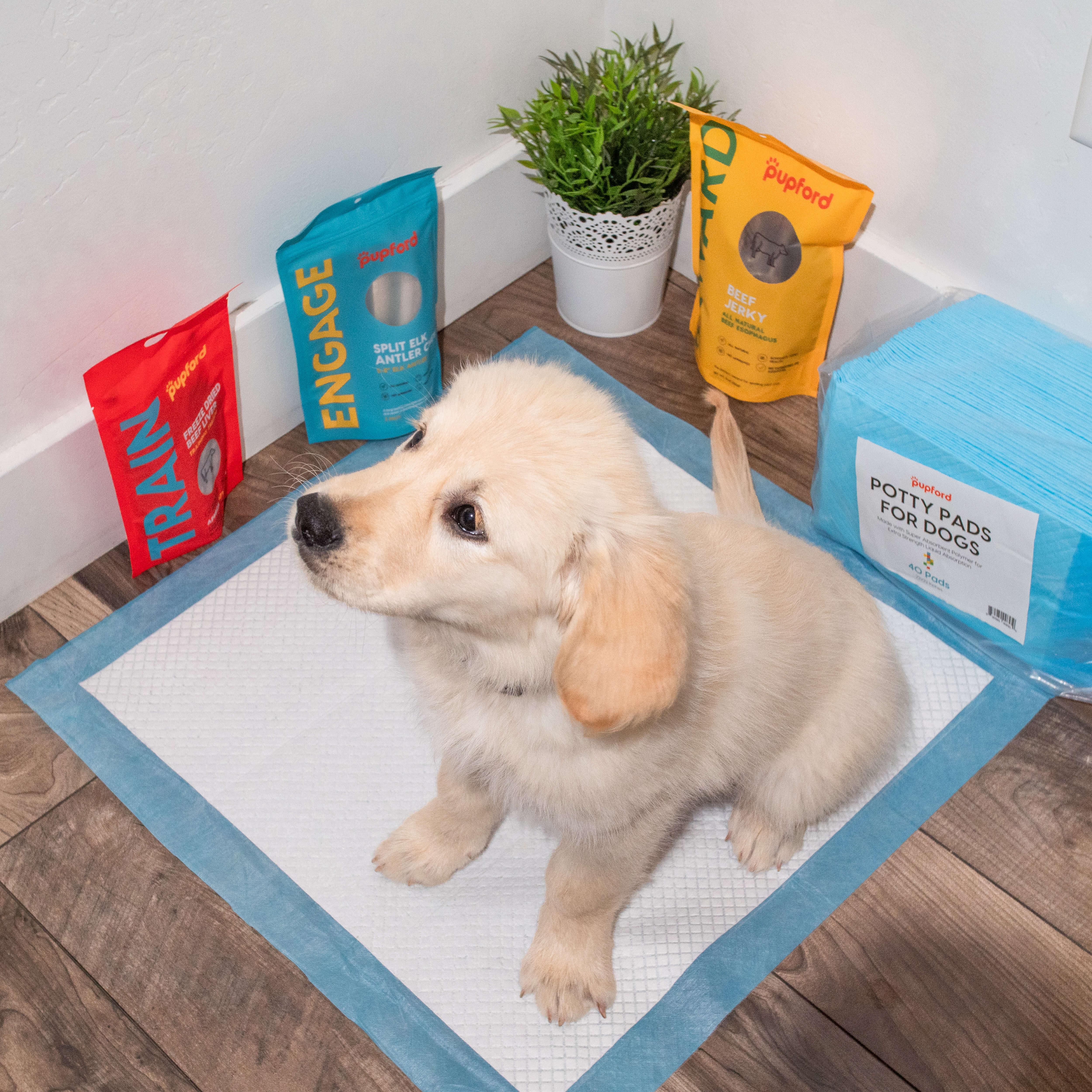 dog on potty pad | Pupford