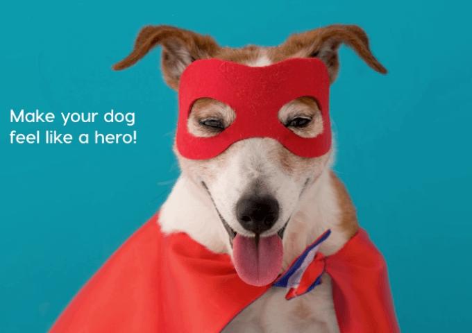 make your dog feel like a hero | Pupford